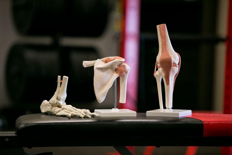 Bones for advanced course